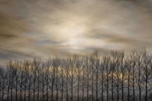tree_jon_bower
