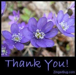 thankyou_flowers2.jpg