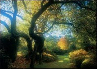 nice-woodland_lg